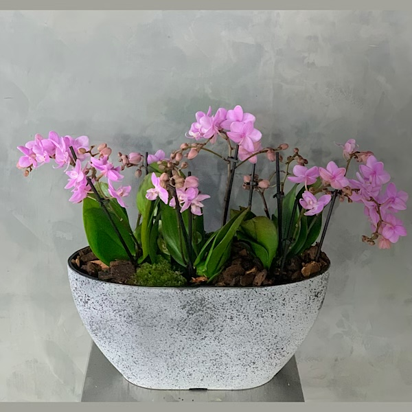 Pink Concrete Premium Collection