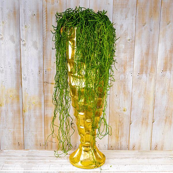 ريبساليس - نبات معلق نباتات داخلية
