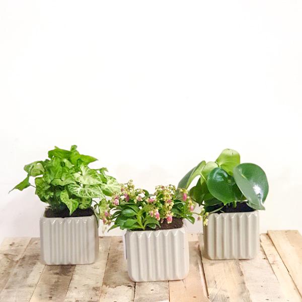 Clay Pots Premium Collection