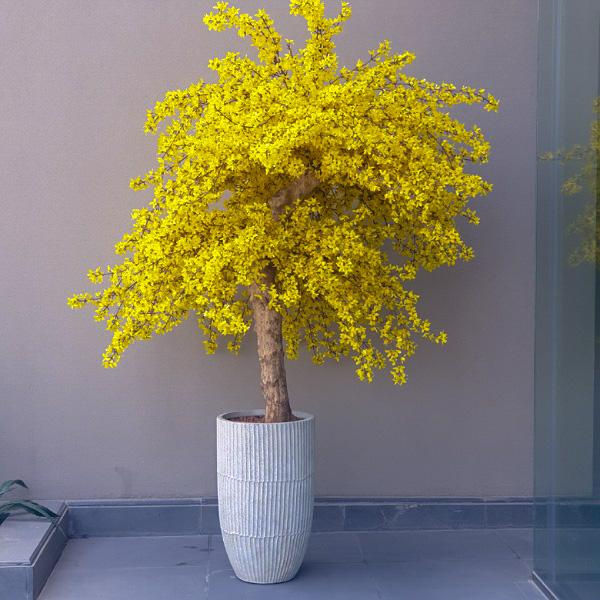 الشجرة الصفراء نباتات اصطناعية