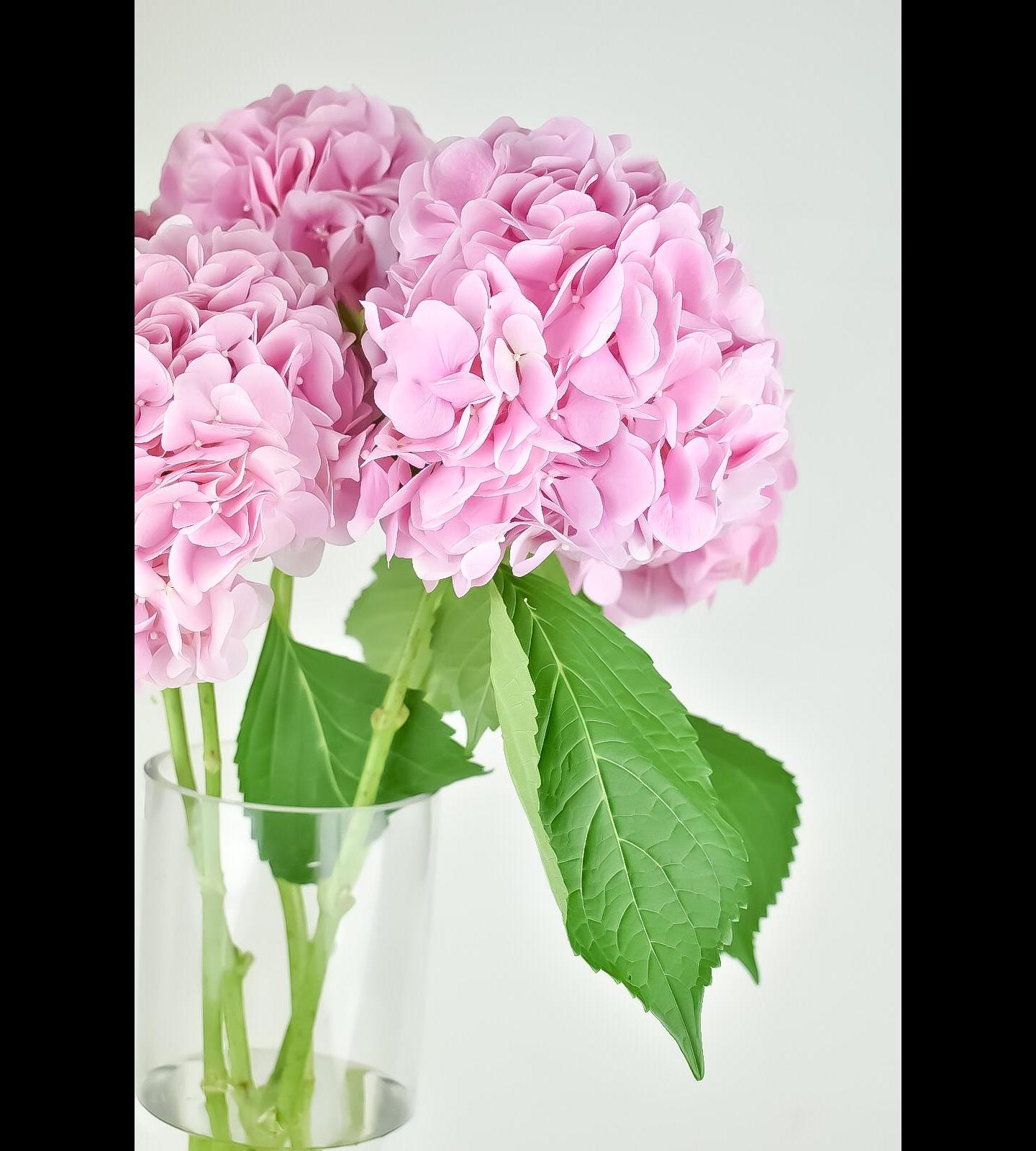 الكوبية - وردي فاتح  الزهور بالجملة