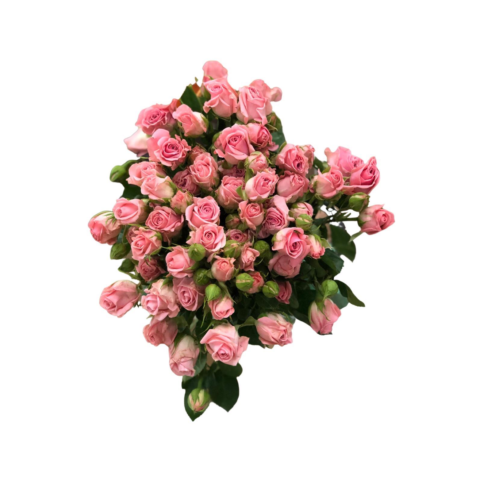 سبراي روز (وردي) ' الزهور بالجملة'