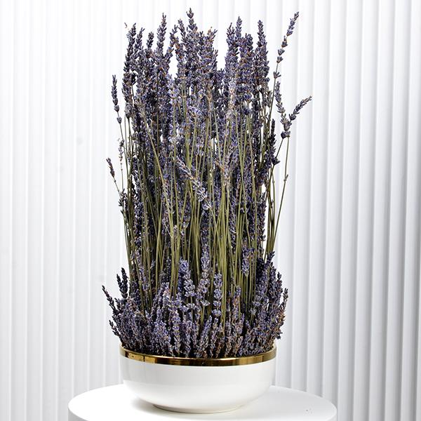 Lavender Beauty  Premium Collection