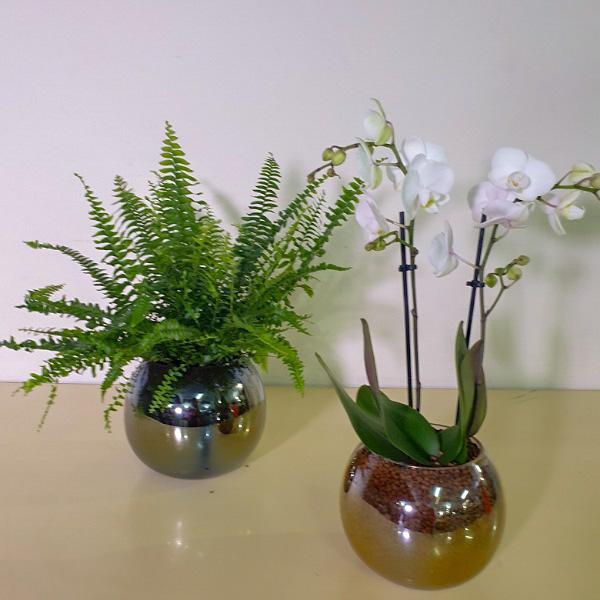 Plant & Orchids Premium Collection
