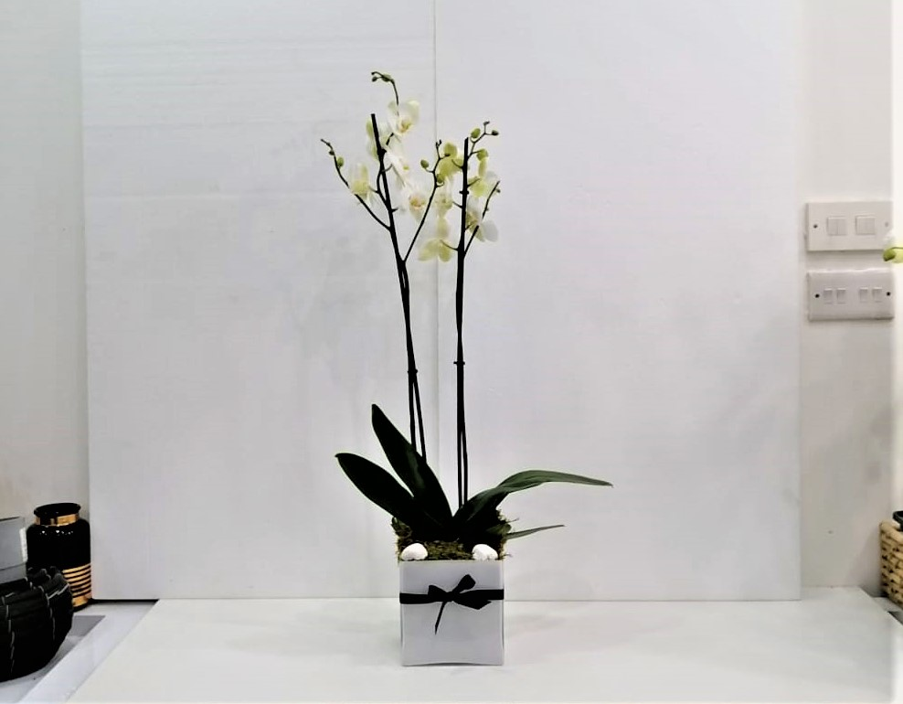 Orchid In White Vase Flower with Base