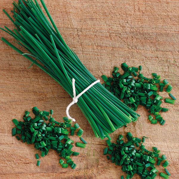 Chives Thick Leaf Seeds