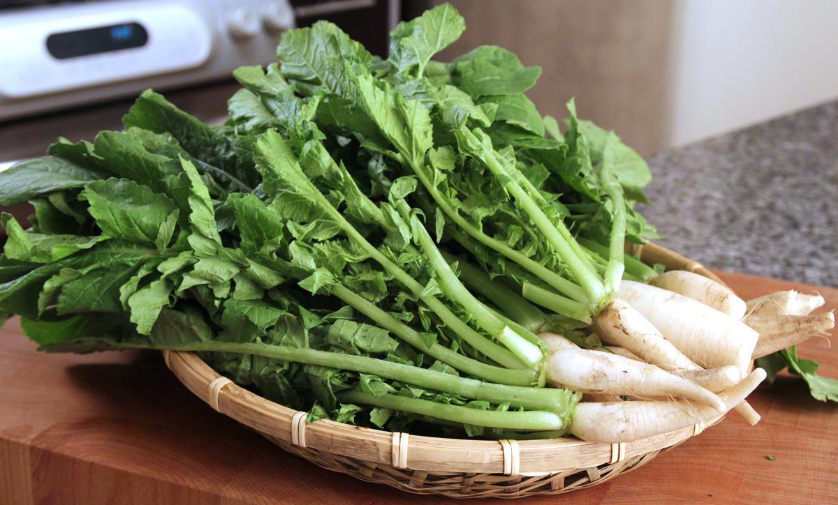 Radish Leaf - Daikon Seeds