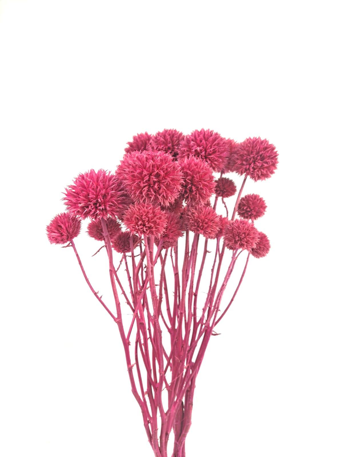 قرصعنة مصبوغ - وردي غامق  الزهور بالجملة