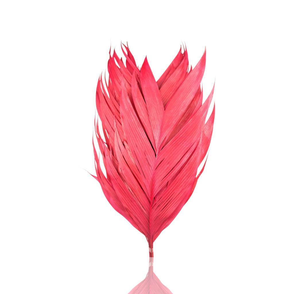 أوراق أريكانا - وردي   الزهور بالجملة