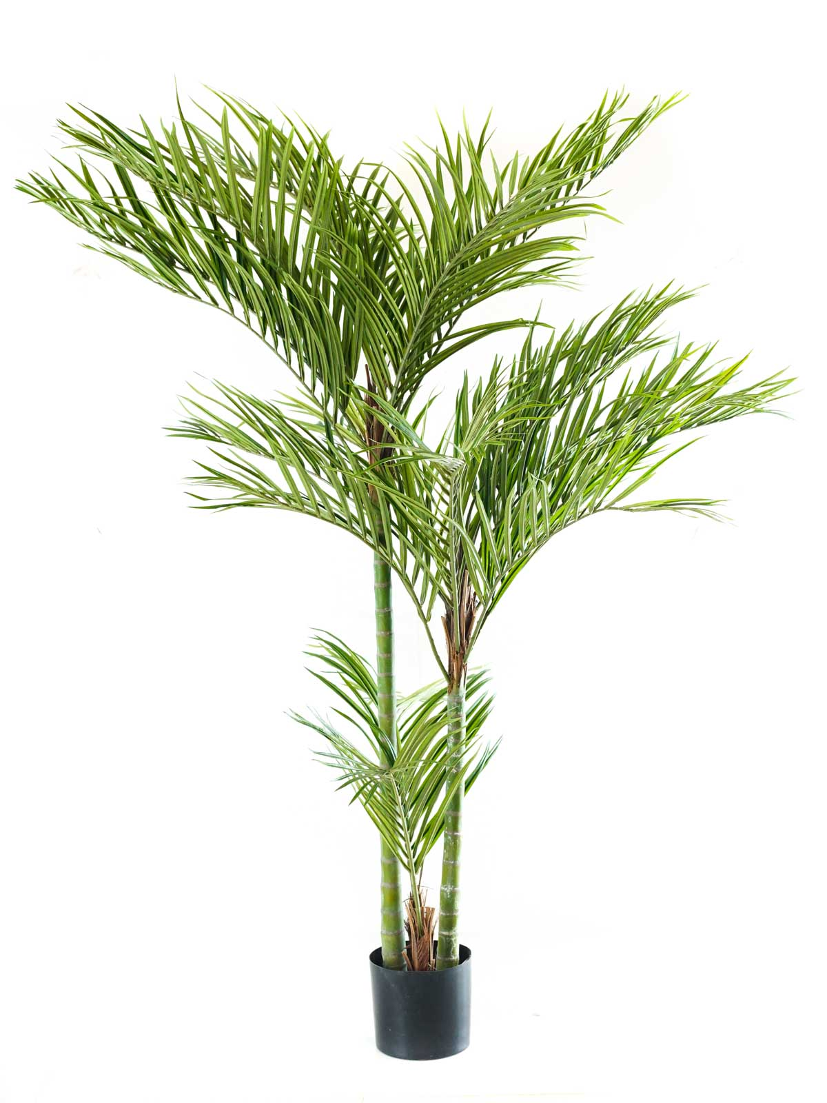 نخلة الاريكا - وسط نباتات اصطناعية