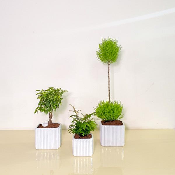 نباتات داخلية ## 33 التشكيلة الفخمة