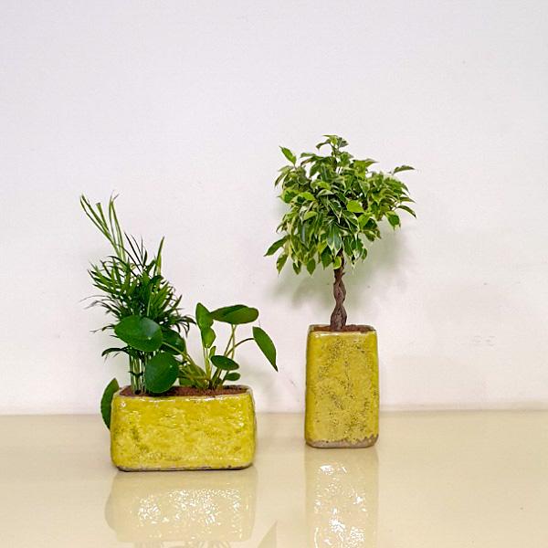 مجموعة نباتات التشكيلة الفخمة