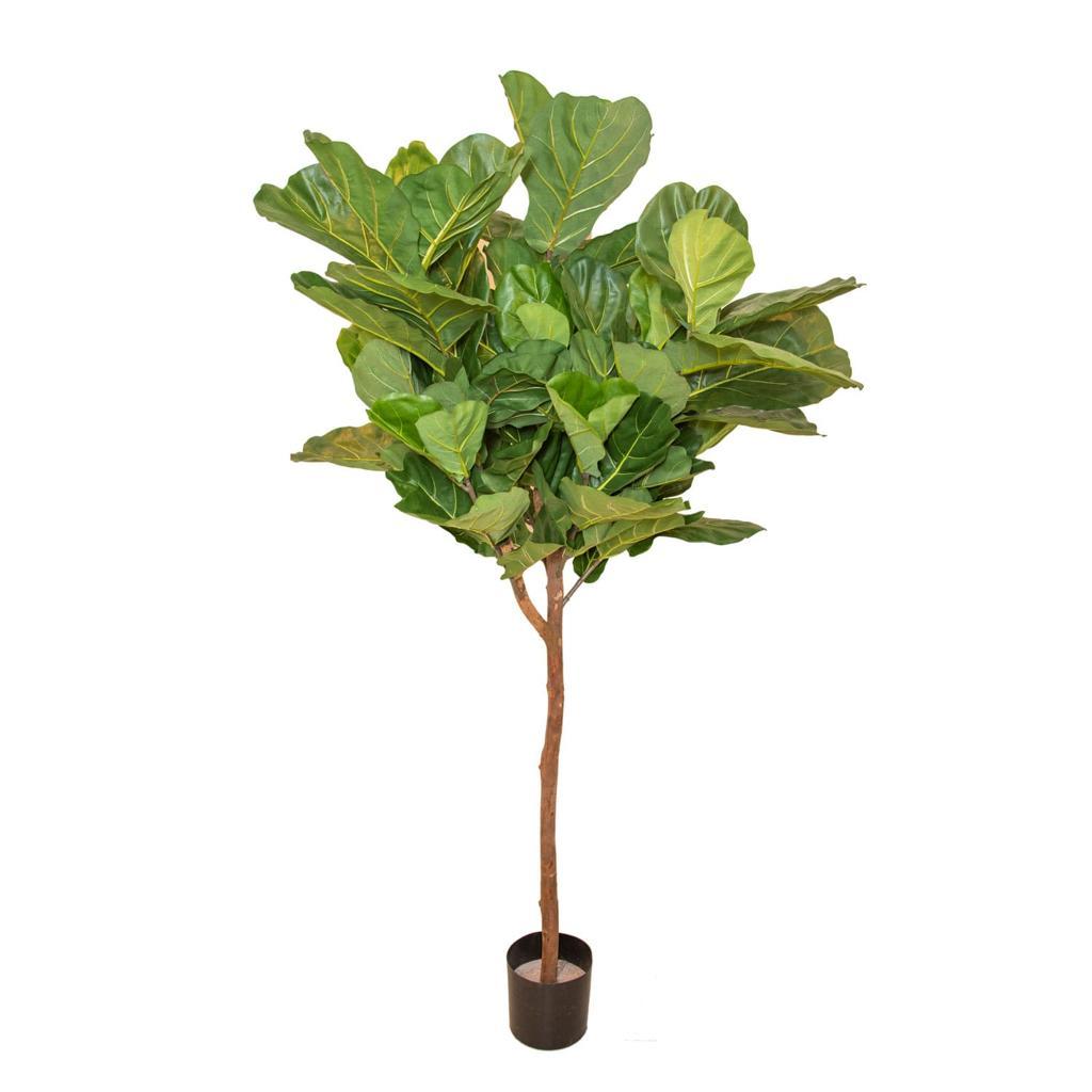 فيدل ليف نباتات اصطناعية