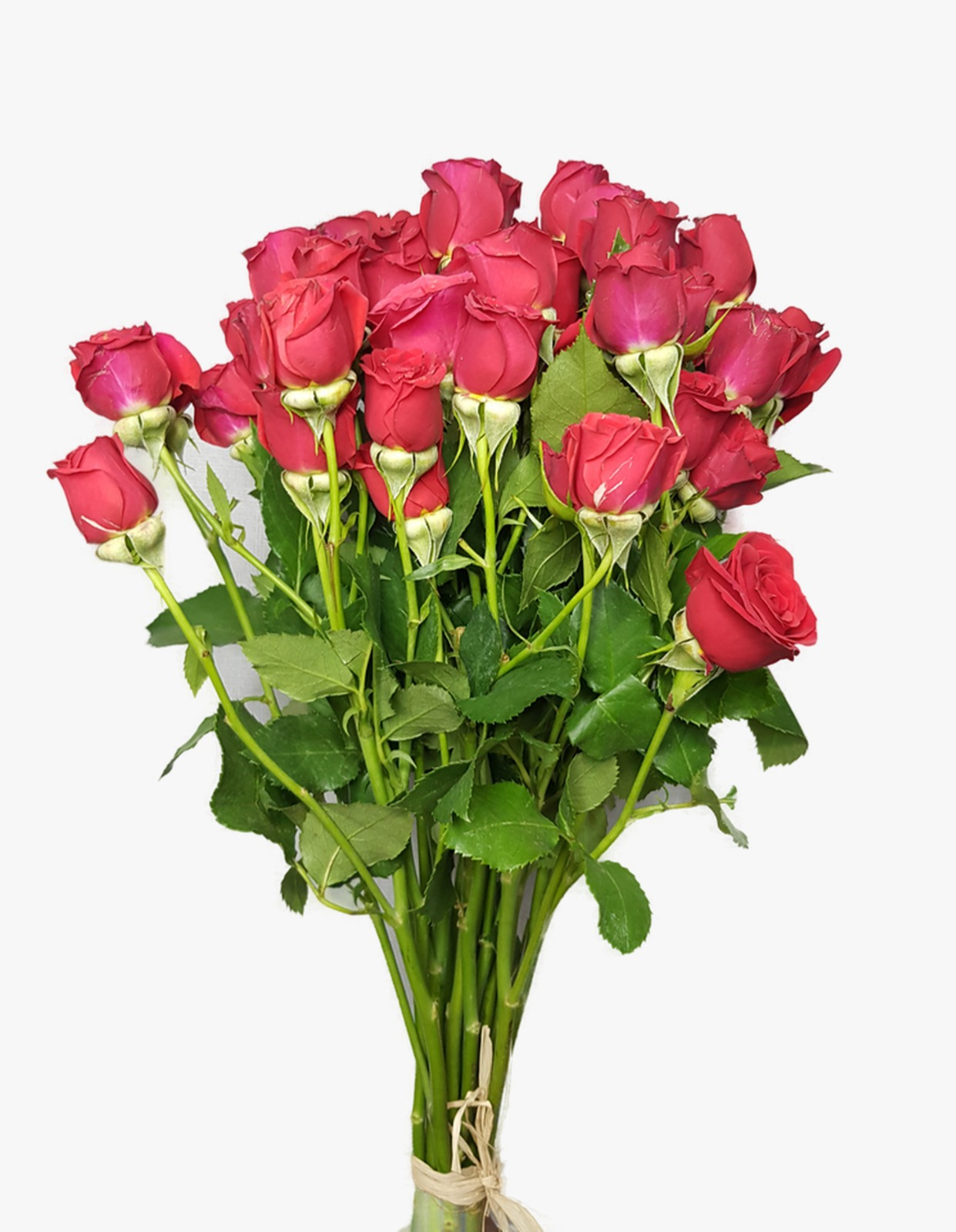 Baby Rose - Red Wholesale Flowers