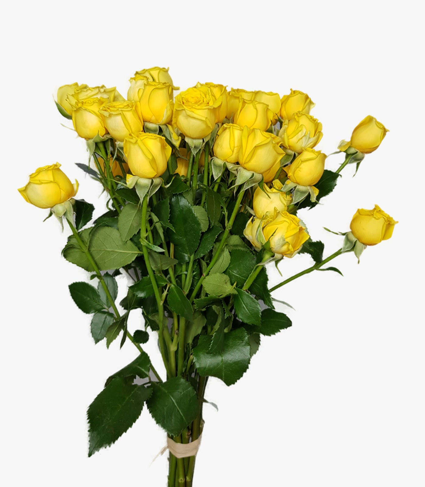 Baby Rose - Yellow Wholesale Flowers