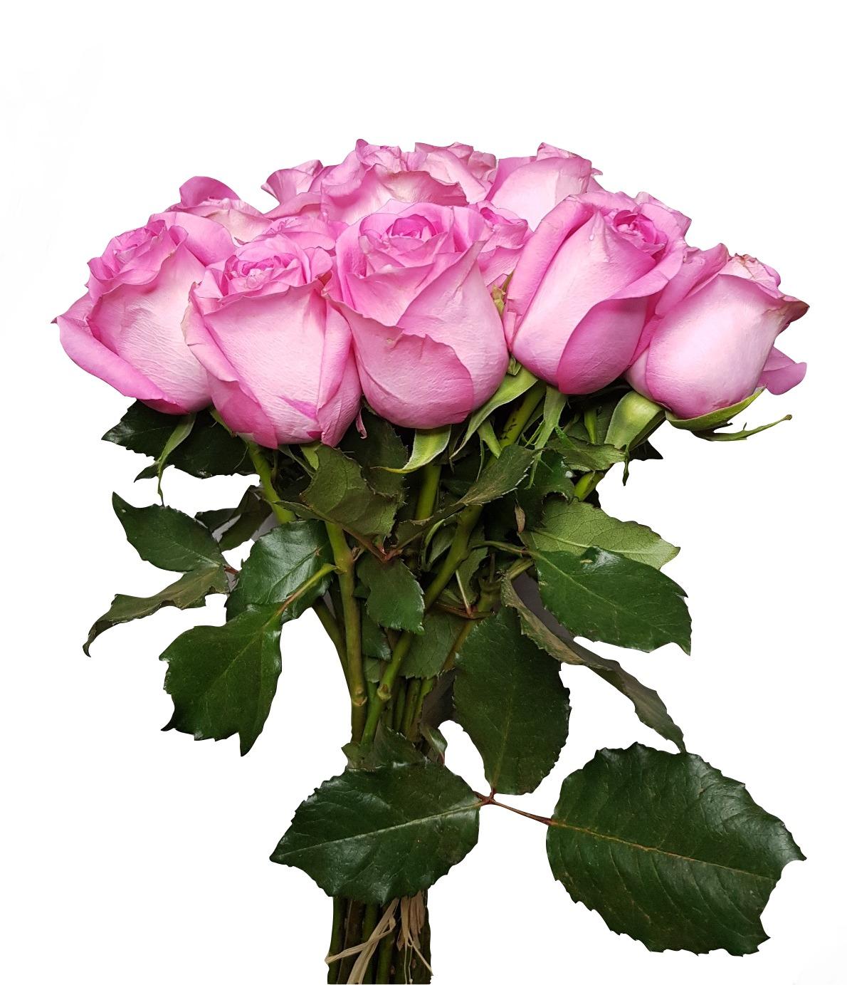 Rose - Pink Wholesale Flowers