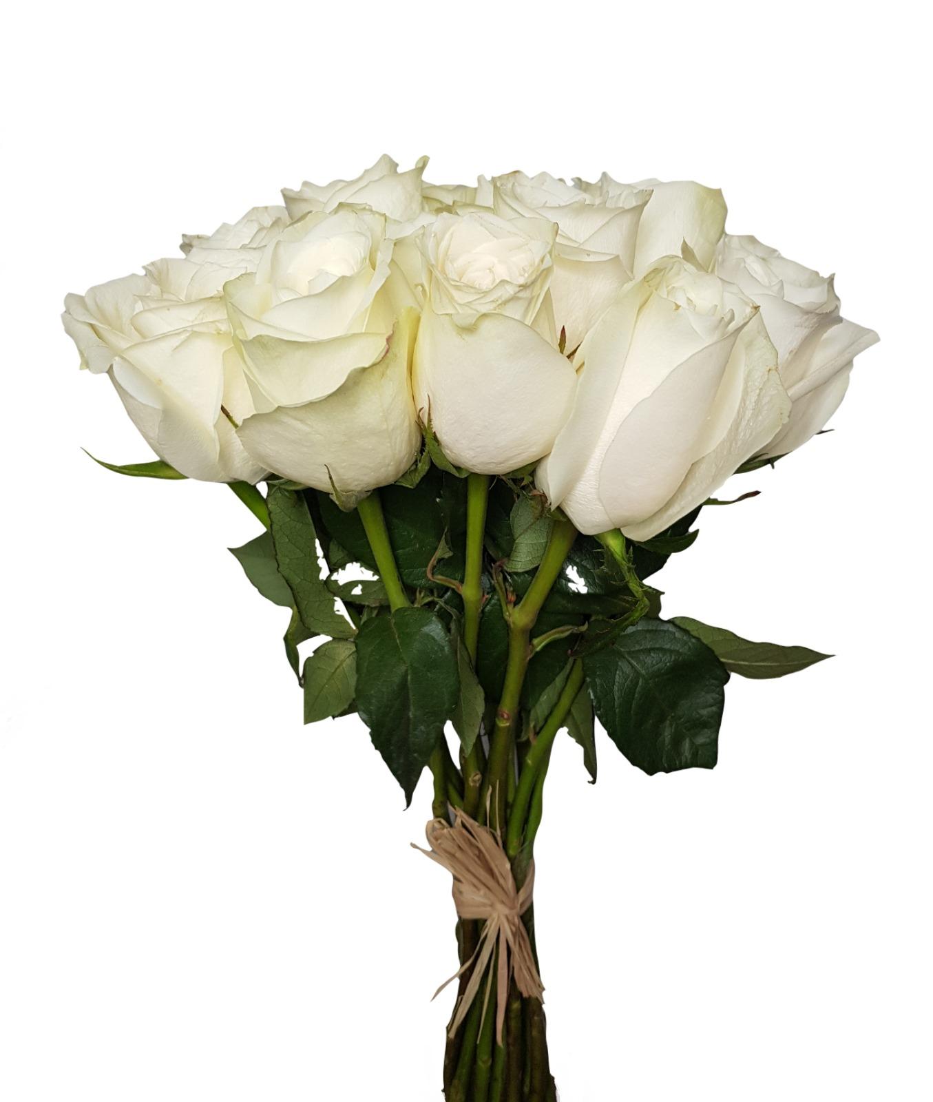 Rose - White 'Wholesale Flowers'