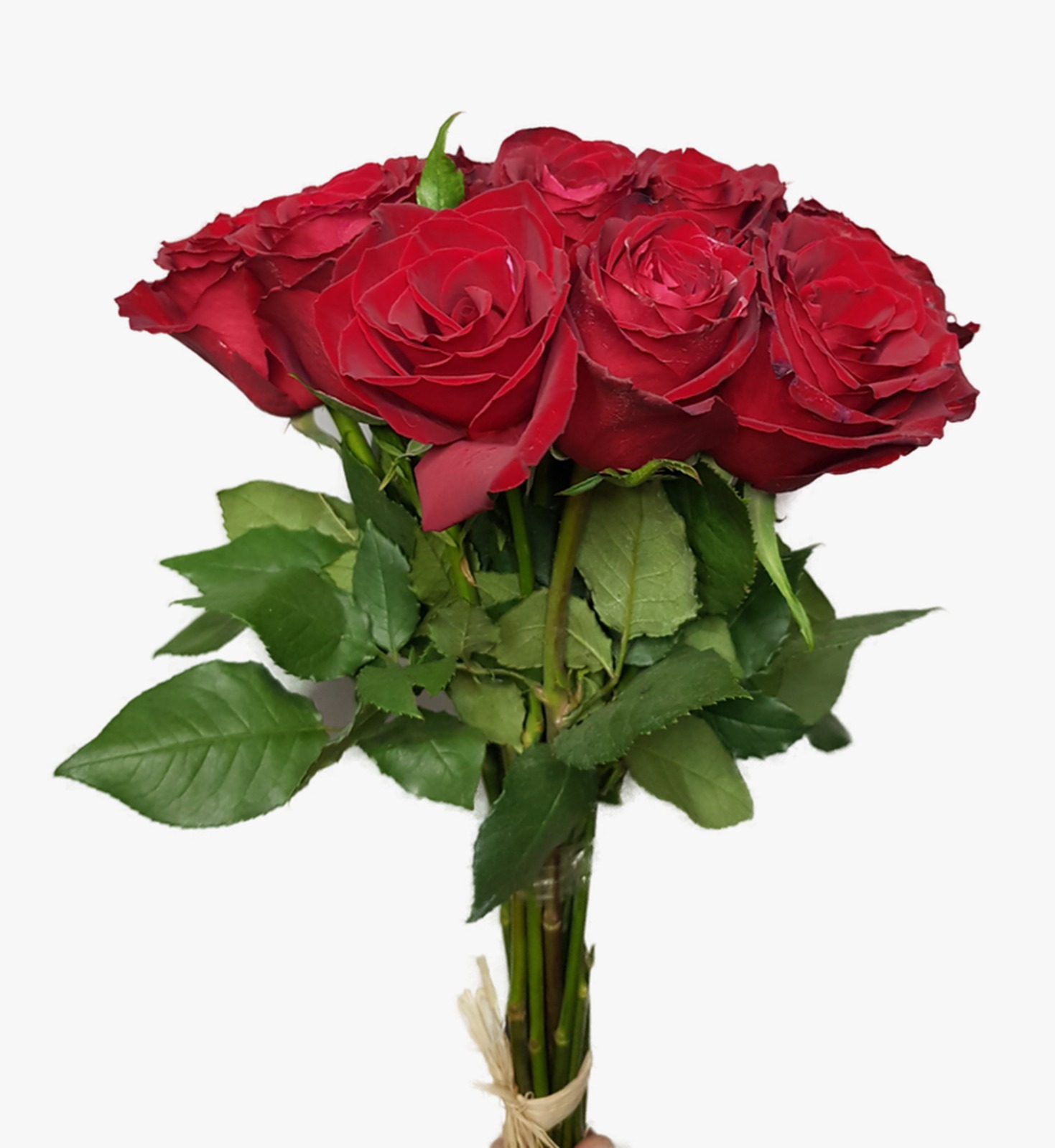 Rose - Red 'Wholesale Flowers'