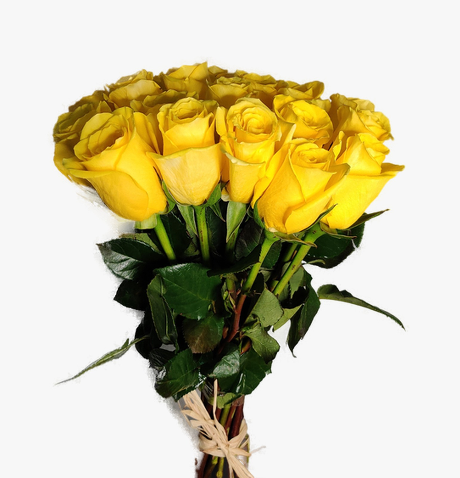 Rose Yellow Wholesale Flowers