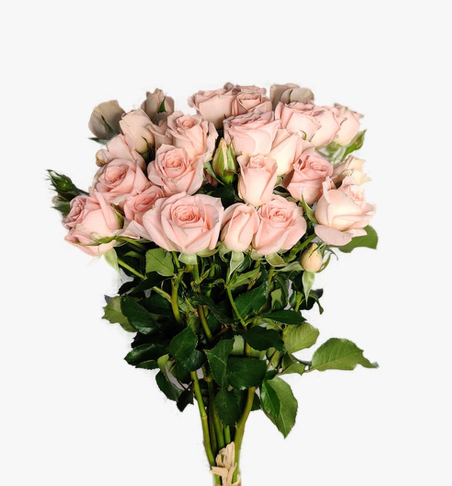 بيبي روز سويت سارا  الزهور بالجملة
