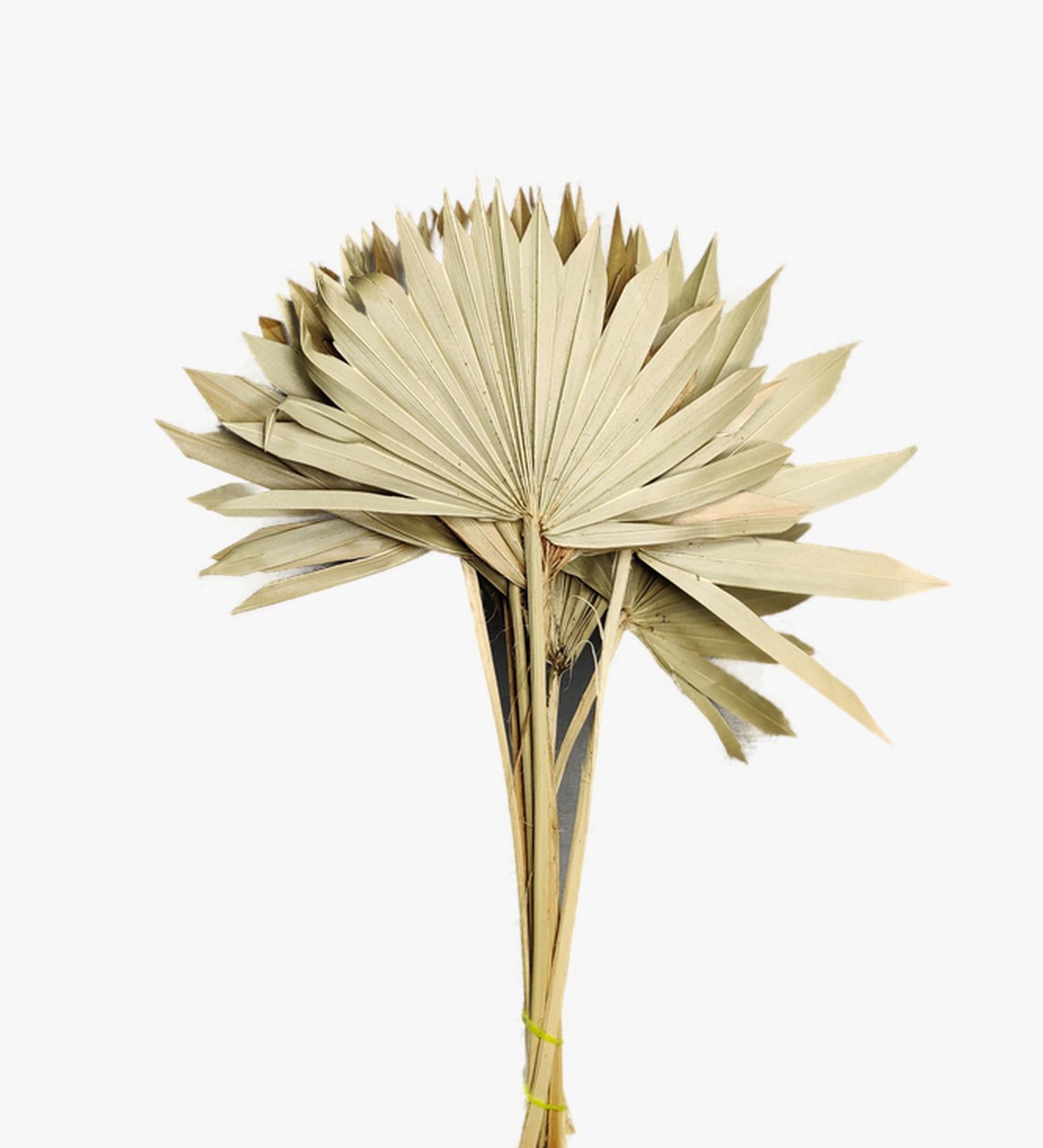 شمس النخيل الطبيعي  الزهور بالجملة