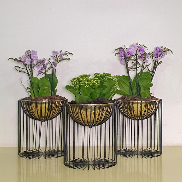 الأبراج  نباتات داخلية