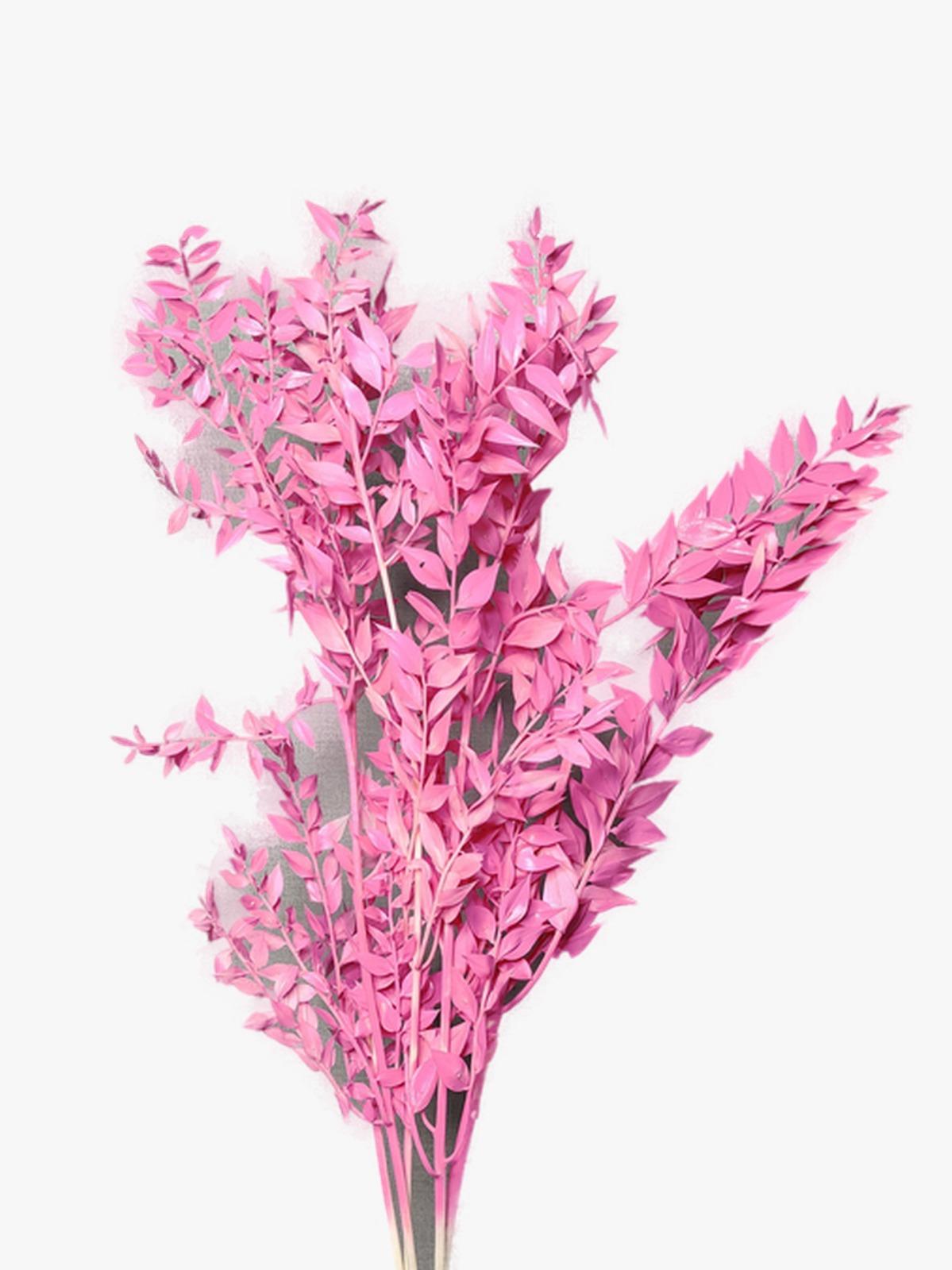 راسكاس - وردي  الزهور بالجملة