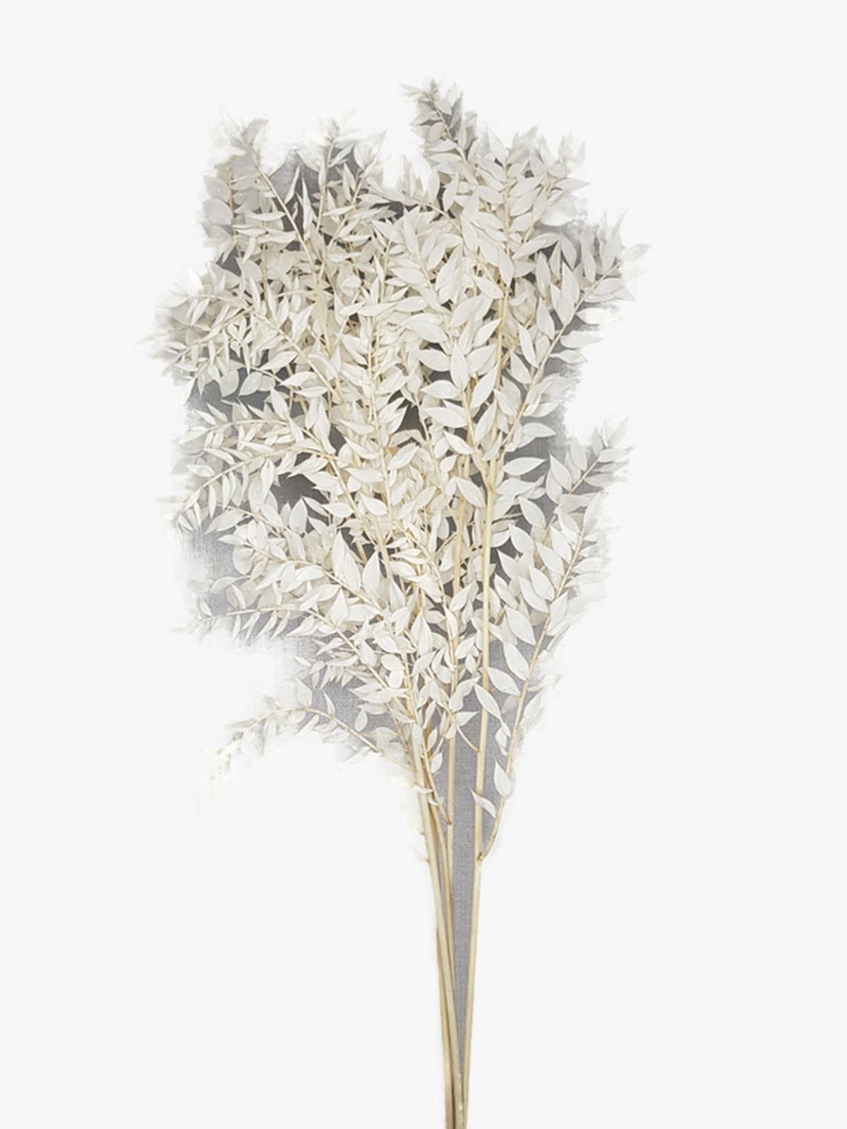 راسكاس - أبيض  الزهور بالجملة