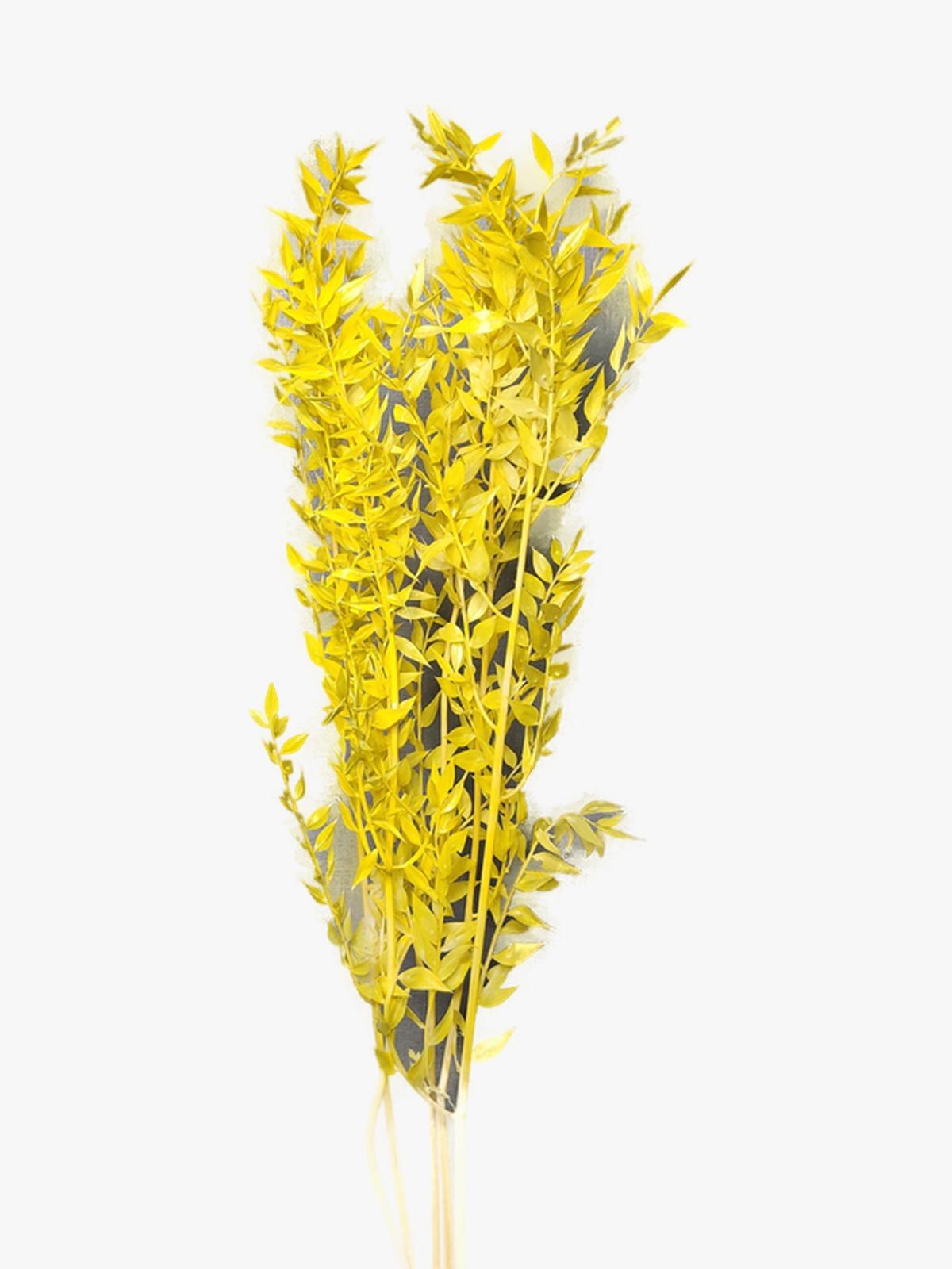راسكاس - أصفر  الزهور بالجملة