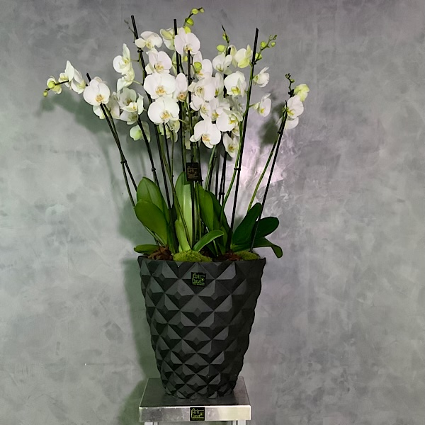 Black Heraldy Vase  Premium Collection