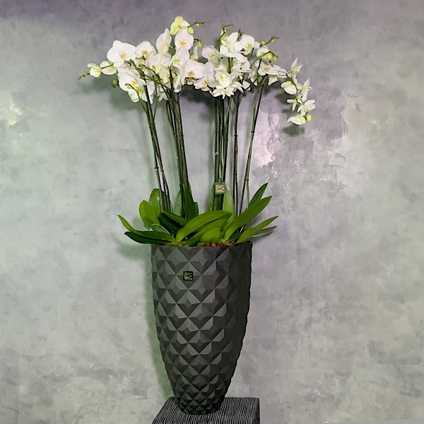 XXL Herlady Vase With Orchids Premium Collection