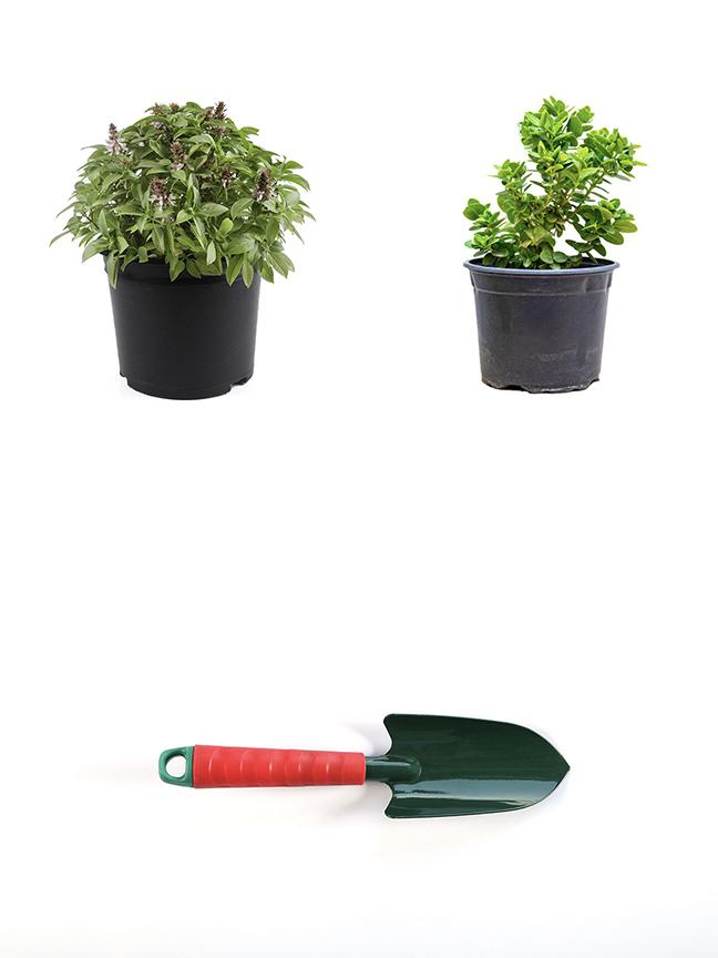 مشموم + كاريسا + معدات يدوية نباتات داخلية