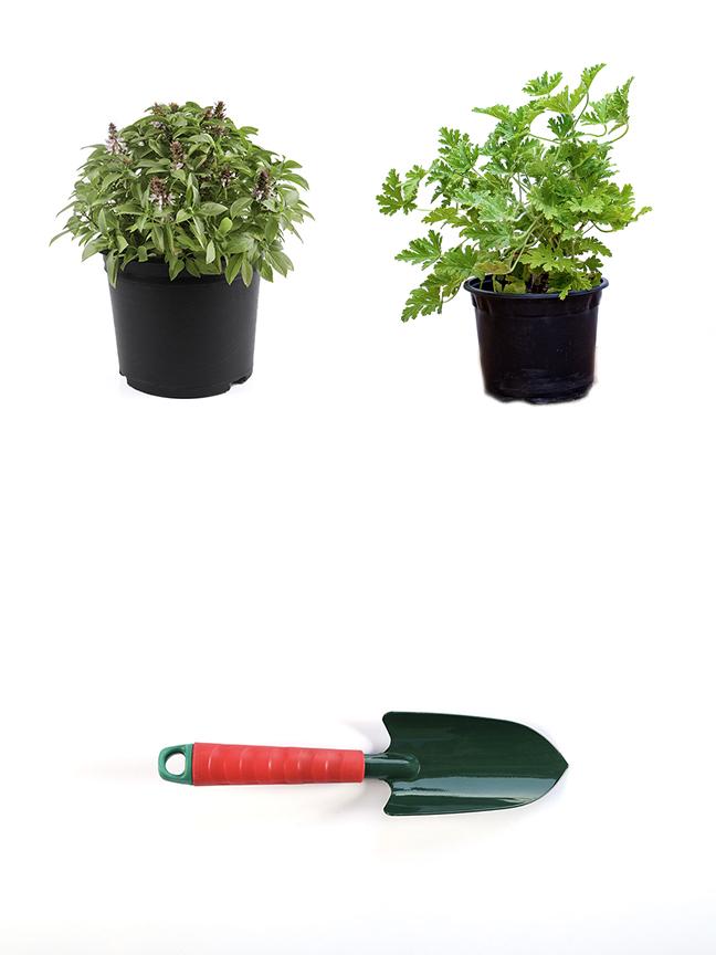 مشموم+ عطر + معدات يدوية نباتات داخلية