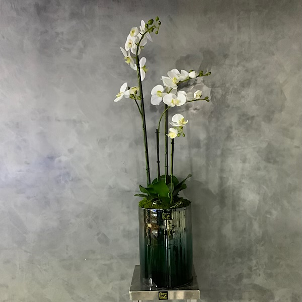 4 Orchids Art Premium Collection
