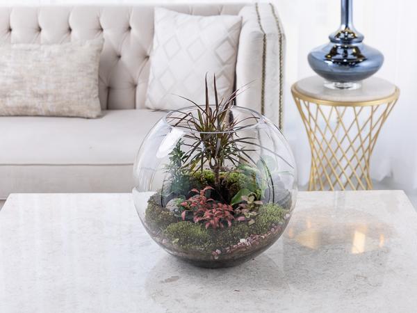 Palm Terrarium