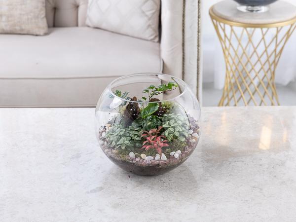 Gardenia Terrarium