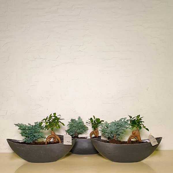 Office Plants 12 Premium Collection