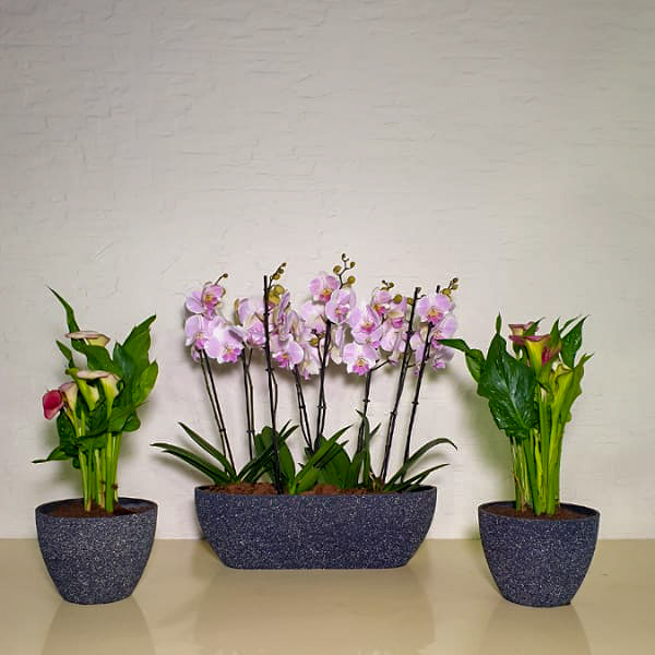 Orchids And Calla Premium Collection