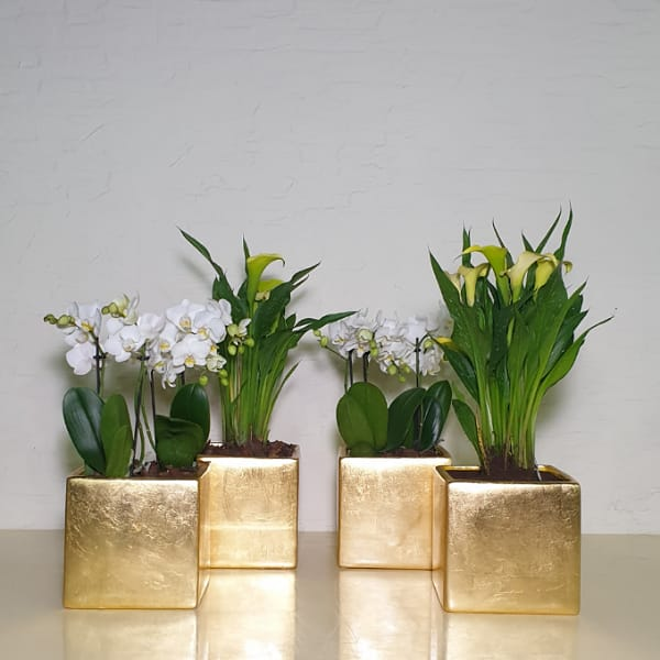Orchid And Calla Premium Collection