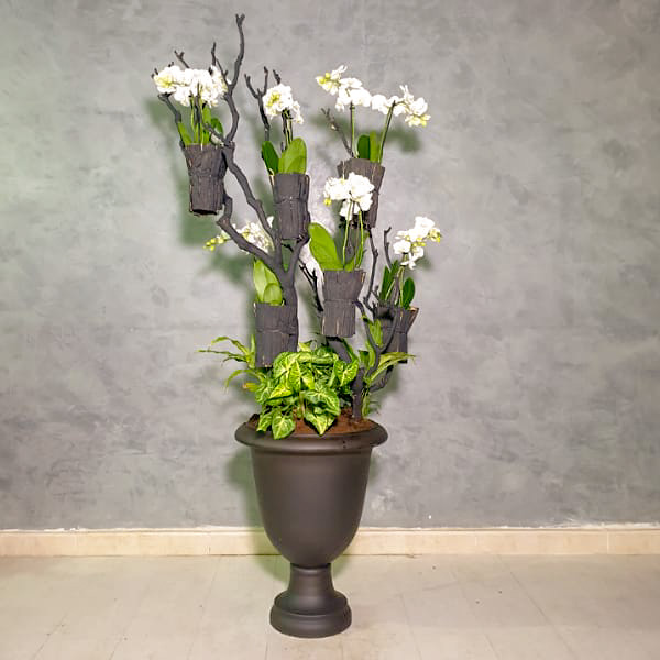 Orchids Tree 1 Premium Collection