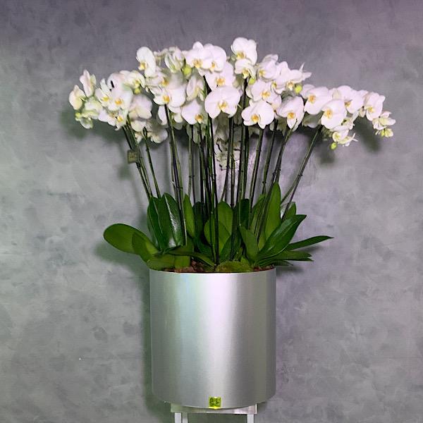 Allu Vase With 20 Orchids Premium Collection
