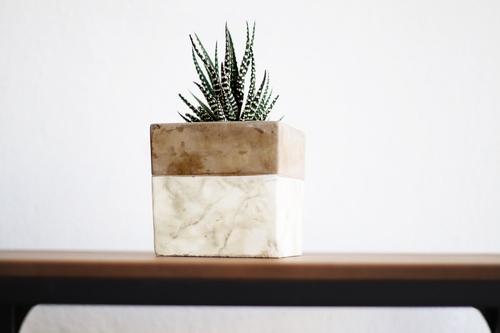 Cactus With Pot Premium Collection