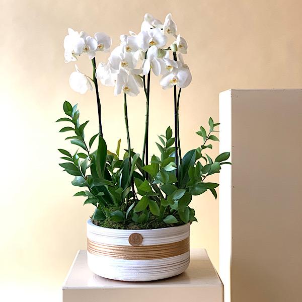 White Simple Indoor Plants