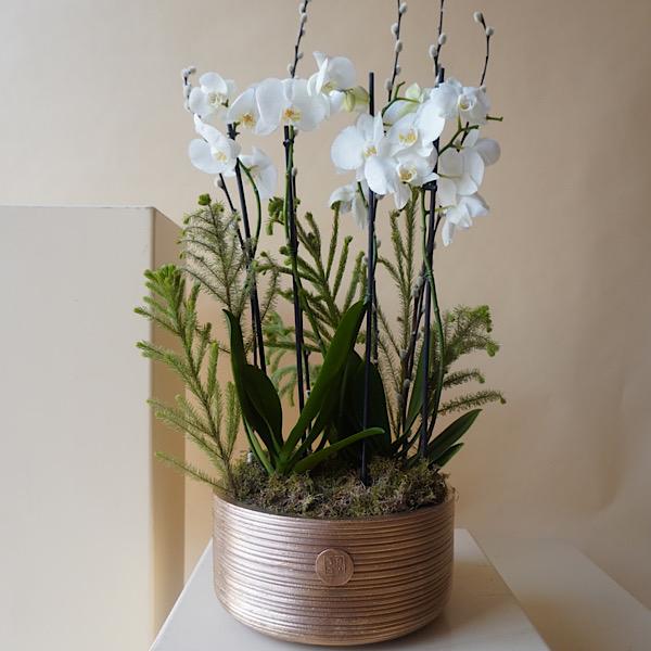Golden Classy Indoor Plants