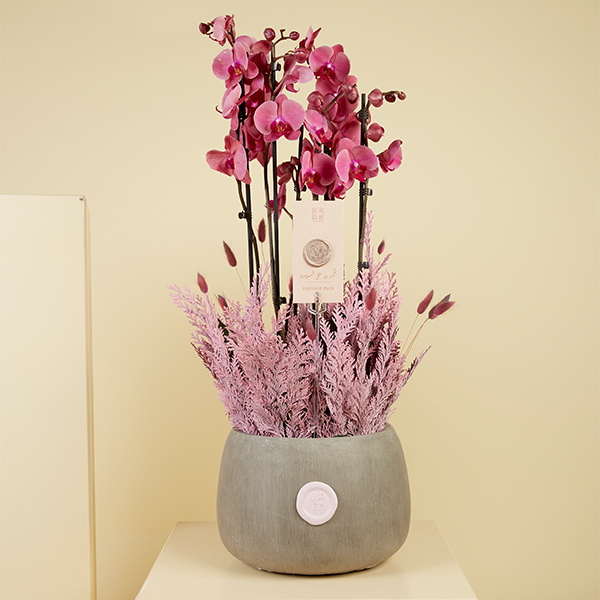 Love Edition Small Indoor Plants