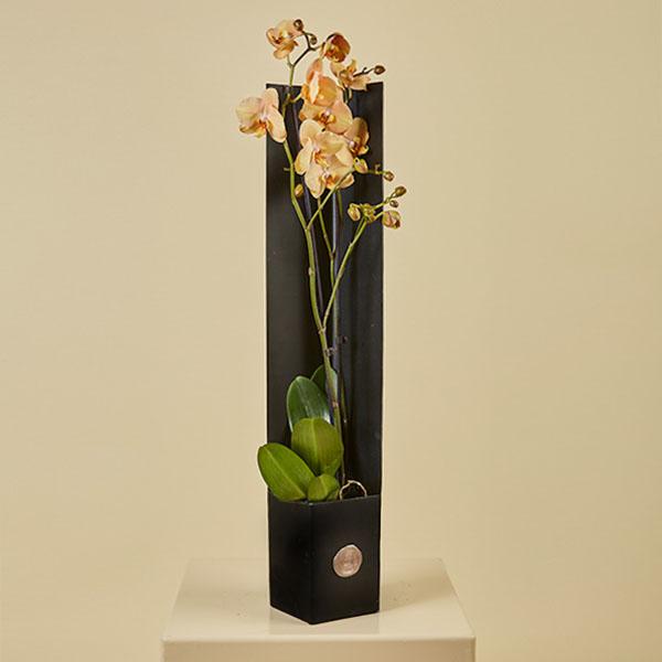 هذا التنسيق يحتوي على زهور الاوركيد. نباتات للمكاتب