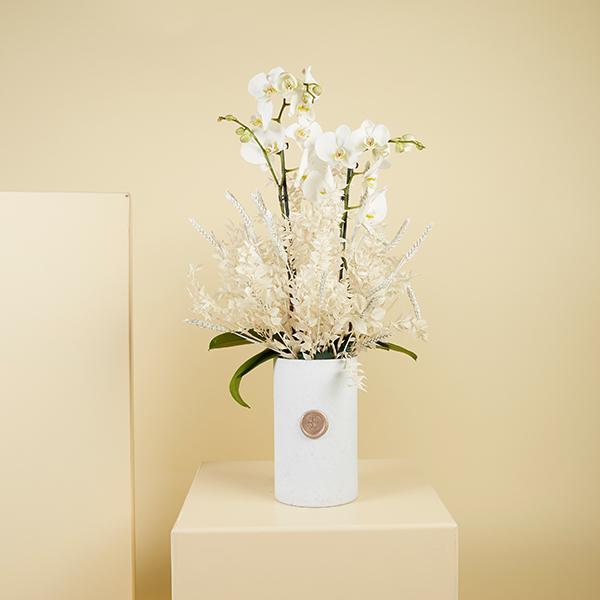 سنو وايت1 نباتات للمكاتب