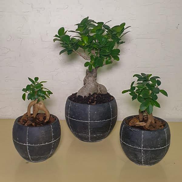 Bonsai Black Pots#2 Premium Collection