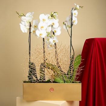 Golden Veins  Indoor Plants