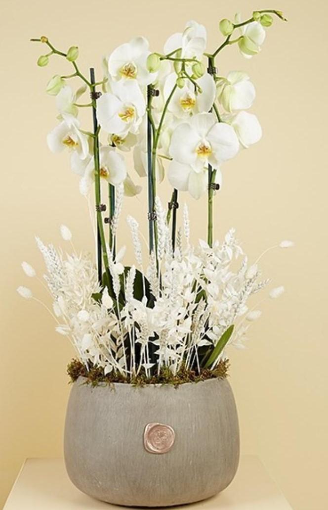 White Romance Indoor Plants